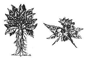 hierbas de las brujas